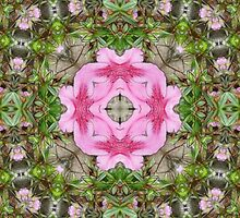 Pink Azaleas 1E kaleidoscope 9 by Christopher Johnson