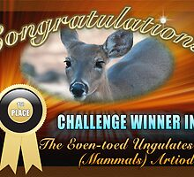 1st Place winner in Even-toes ungulates group by imagetj