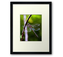 Dragonfly #4 Framed Print