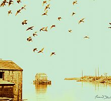 Flight at Peggy's Cove by Imagery