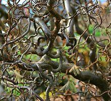 Gnurly Tree - 3 by Honario
