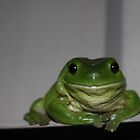 Green Tree Frog by afincher