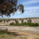 After the harvest ~ Harden NSW by Rosalie Dale
