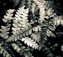 Ferns Lou Campbell Nature Preserve by Mitch Labuda
