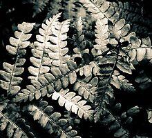 Ferns Lou Campbell Nature Preserve by Mitch Labuda