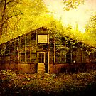 Abandoned Green House- soon to be demolished by MJD Photography  Portraits and Abandoned Ruins