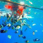underwater world by lensbaby