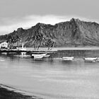 Kaneohe Bay Study by jyruff
