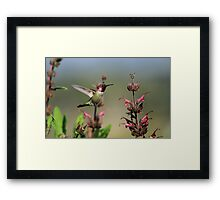 Ruby Throated Hummer Frozen With Style Framed Print
