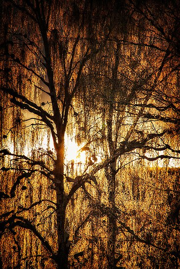 Golden Tree by Erik Brede