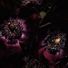 Gothic Anemones by Ann Garrett