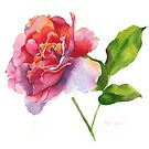 Rose Watercolor II by Pat Yager