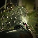 Victoria Crowned Pigeon by steppeland