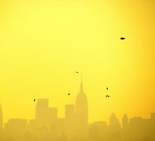 Sunset birdies, New York City by Alberto  DeJesus