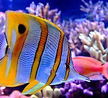 Aquarium by Jill Hyland