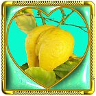 UnusuaL Lemon by Johnkinman