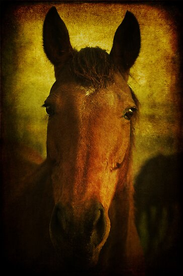 equine evening  by Clare Colins