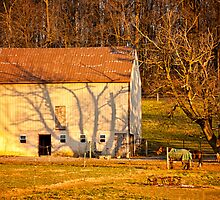 Tree Shadow on Barn in Early Morning Light by KellyHeaton