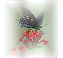 Beauty Flies Poster