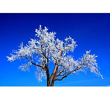 A Touch of Frost Photographic Print
