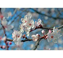 Botanical Blossoms Photographic Print