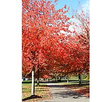 Autumn in the City Photographic Print
