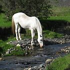 Horse and Stream by FathersWorld