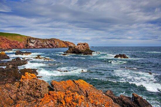 St. Abbs Rocks by Tom Gomez