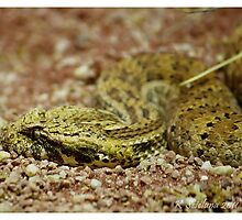 side view of a death adder by bluetaipan
