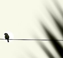 A bird on a wire by iamelmana