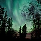 The Auroras through the Trees by peaceofthenorth