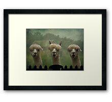 The Alpaca Farm Framed Print