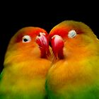Lovebirds by Tamara  Kenneally
