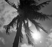 Palm Flare by AnalogSoulPhoto