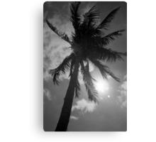 Palm Flare Canvas Print