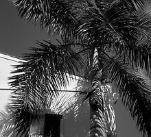 Tropical Shade by AnalogSoulPhoto