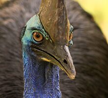 Cassowary by paulmarkey