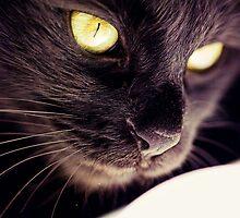 Black cat detail  by Sabina Dimitriu