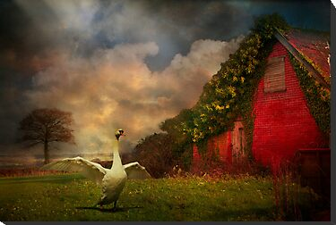 Red Barn by ajgosling