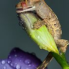 Thirsty young Crested gecko by AngiNelson
