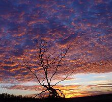 Sunset Tree by Carolyn  Fletcher