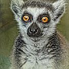 Portrait of a Lemur  by Selina Ryles