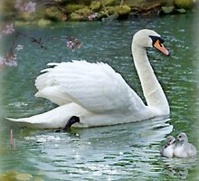 Swan Lake by Morag Bates