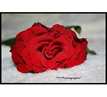 A Single Red Rose Photographic Print