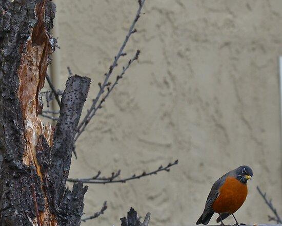 Backyard Birds by HanieBCreations