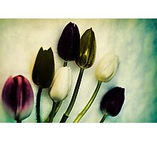Tulip Ghosts Photographic Print