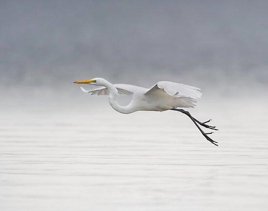 Foggy Flight by Daniel  Parent