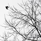 flying silhouette bird by anchorsofhope