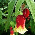 Floral Bells by kkmarais