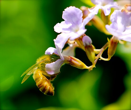 Busy Bee by YingDude